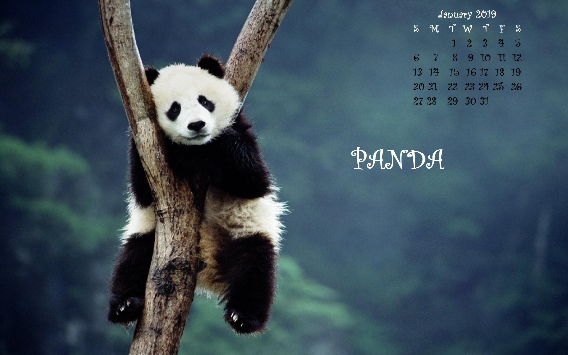 January 2019 Desktop Wallpaper Panda Calendar