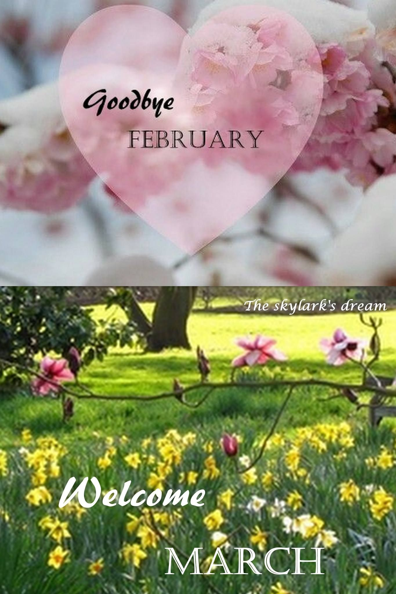 Goodbye February Welcome March Images Quotes
