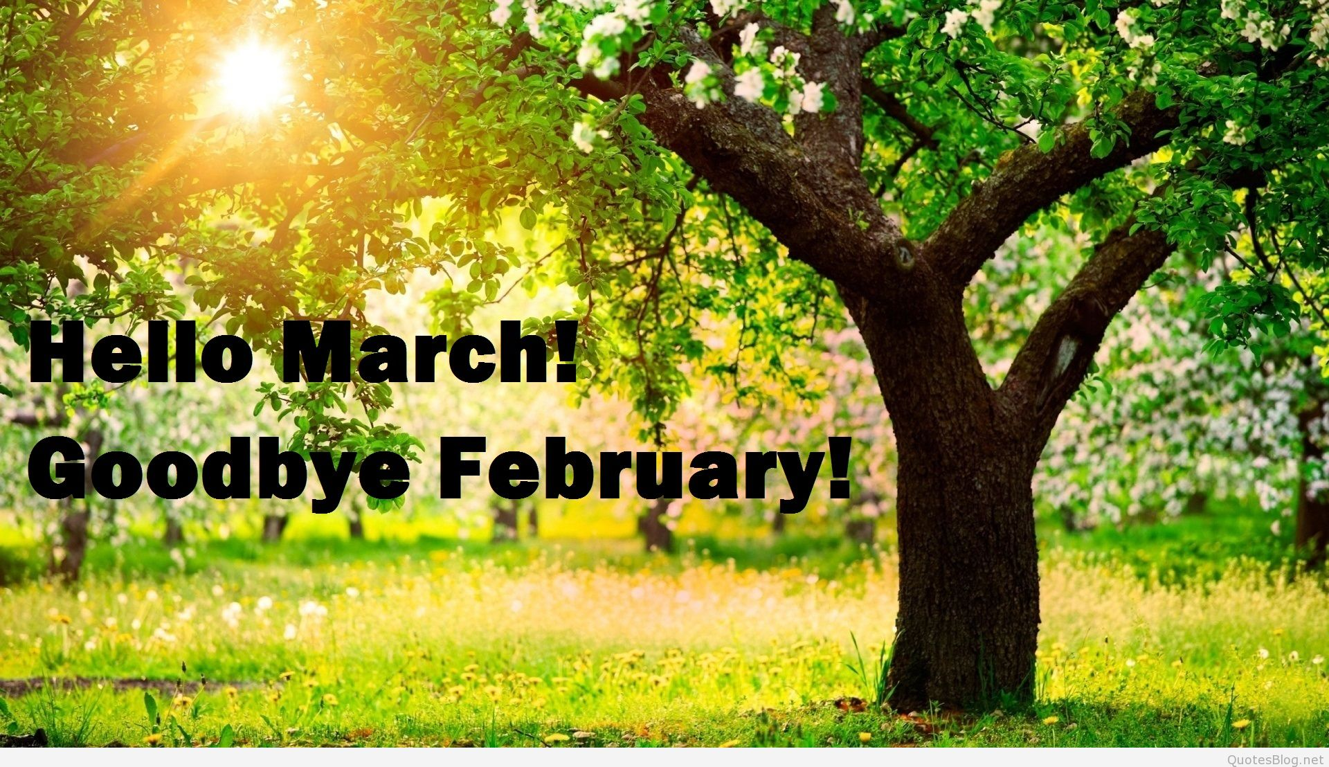 Goodbye February Welcome March Wallpapers