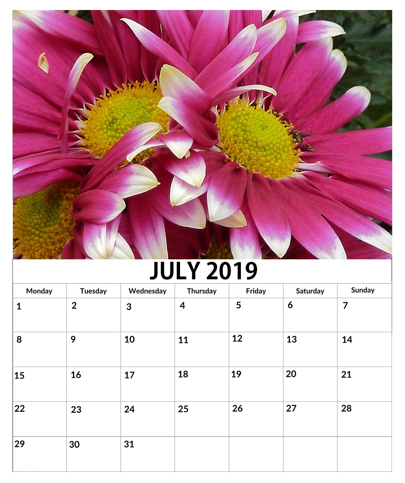 Beautiful Wall Calendar July 2019